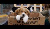 """O inițiativă grozavă: Vizitatorii unui cinema bucureștean pot adopta un câine, începând cu premiera """"Câinele, adevăratul meu prieten"""""""