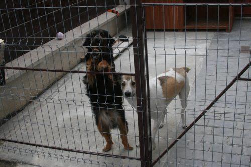 Proiect ASPA București, câinii comunitari vor putea fi îngrijiți de colectivitațile de proprietari