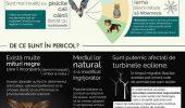 Câteva informații utile, despre lilieci!