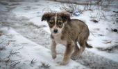 Acțiunea ȘOCANTĂ de la Botoșani a fost stopată, câinii au fost salvați