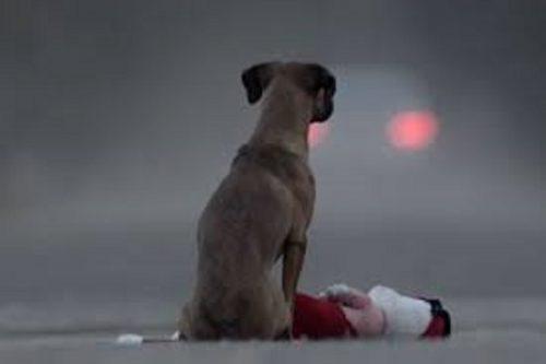 Un câine ADOPTAT își va uita cu greu stăpânul? Uite ce spun specialiștii