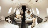 Proprietarii de câini își pot lua patrupezii în avion lângă ei, într-un tur organizat în Japonia
