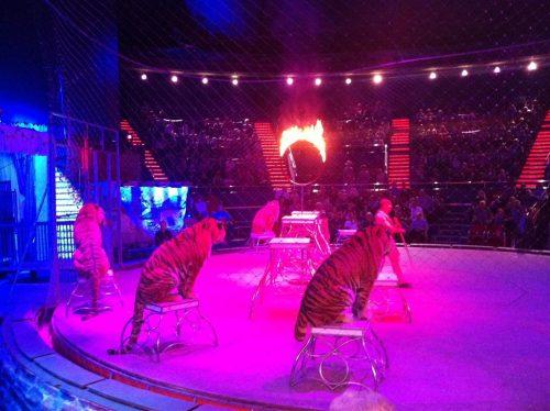 Dresura de animale, exclusă din obiectul de activitate al Circ&Variete Globus București
