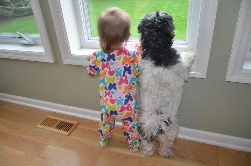 Modul în care ne adresăm câinilor ar trebui adaptat în funcție de vârsta acestora (studiu)