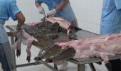 sursa foto - http://www.sopitas.com