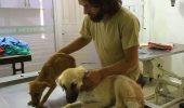 Un tânăr fotomodel a renunțat la o carieră de succes pentru a avea grijă de peste 500 de câini