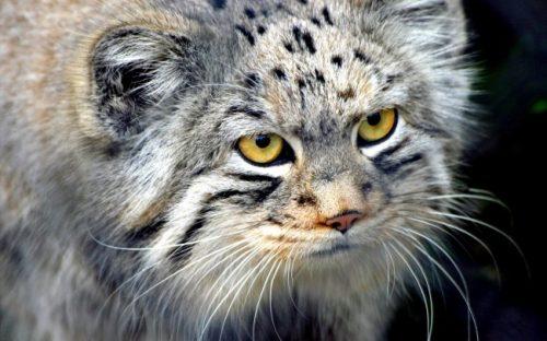 Pisica ta NĂPÂRLEȘTE? Sfaturi utile pentru a trece mai ușor de această perioadă