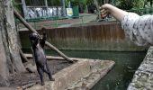 ȘOCANT: Urși numai piele și os într-o grădină zoologică din Indonezia