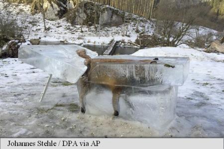 """Un vânător din Germania a """"pescuit"""" o vulpe"""