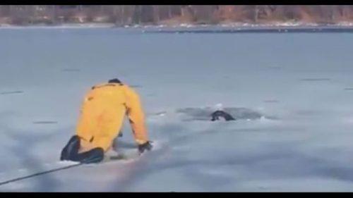 MISIUNE GREA petru un pompier curajos. Uite cum i-a slavat viața unui câine prins de sloiurile de gheaţă / VIDEO