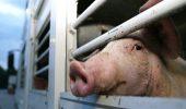 Zile cu ger extrem. Cum trebuie protejate animalele?