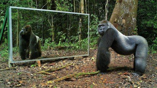 SUPER-AMUZANT! Cum reacţionează animalele în faţa oglinzii. Imaginile au devenit VIRALE pe internet