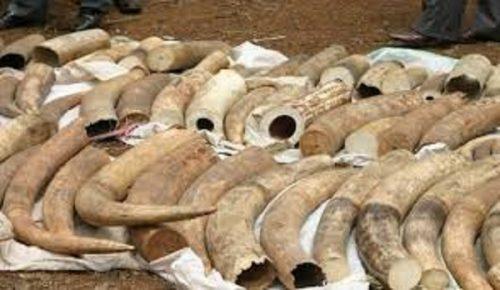Braconierii au omorât toți elefanții dintr-o rezervație naturală din Gabon
