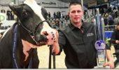 """Câștigătoarea unui concurs de frumusețe din Germania – """"Super-vaca"""" Madame"""