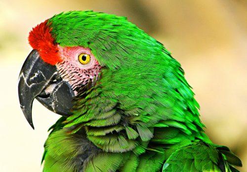 Alimente pe care nu trebuie să le daţi NICIODATĂ papagalului vostru!