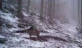 Imagini EXTREM DE RARE surprinse într-un Parc Național din România. Un animal RAR văzut de oameni, filmat într-o pădure. VIDEO