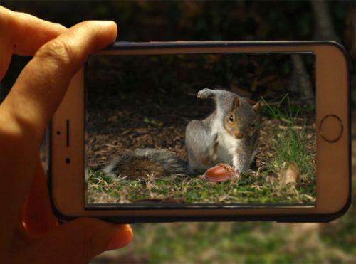 Privește cel mai AMUZANT SET DE FOTOGRAFII cu o veveriță. Câțiva artiști creativi au folosit Photoshop-ul, iar rezultatul este SPECTACULOS / FOTO