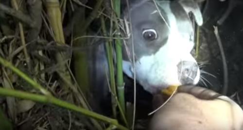 Au fost solicitați să salveze un câine abandonat, însă au avut parte de o surpriză neașteptată! Povestea incredibilă a făcut înconjurul planetei