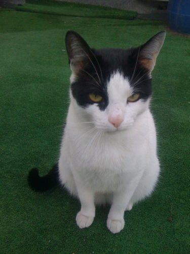IVY, pisicuţa abandonată lângă o cale ferată