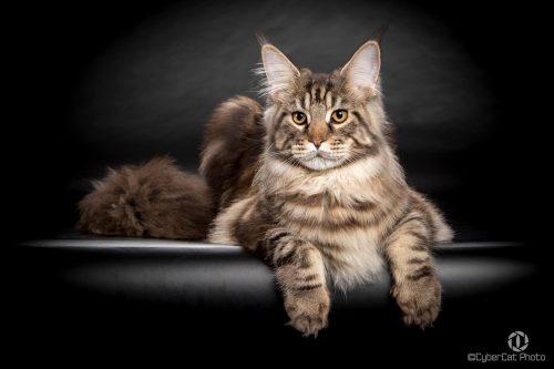 Cele mai frumoase pisici, premiate în 2016