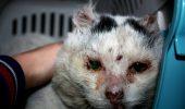 Îl mai știți pe TIGER, felina care a supraviețuit CINCI ANI pe câmp?Cum arată acum pisoiul I VIDEO