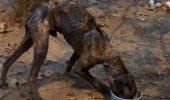 CAZ ȘOCANT! Cum a supraviețuit un câine PATRU ANI legat de un copac?