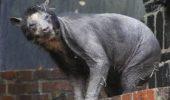 S-au speriat când au văzut această creatură. Ce a pățit de fapt acest ANIMAL? FOTO