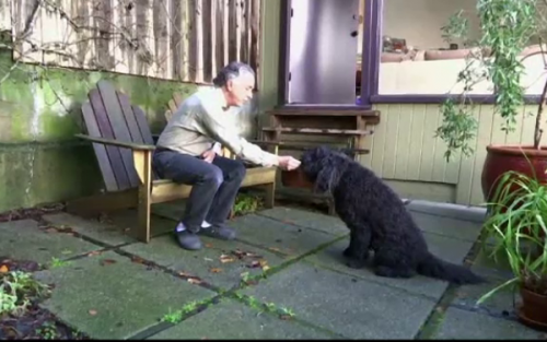 ȘOCANT! Câini tratați cu SUBSTANȚE INTERZISE. Uite ce spun medicii veterinari despre această practică