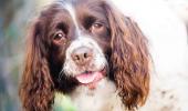 Așa ceva NU S-A MAI ÎNTÂLNIT! Gestul unui câine a emoționat toată Anglia