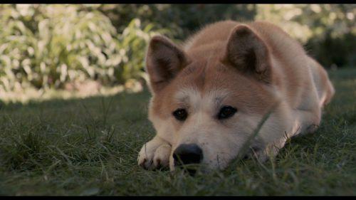 Poveste sfâșietoare: Hachiko, câinele care și-a așteptat stăpanul aproape un deceniu, a murit pe 8 martie 1935