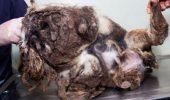 Cum a ajuns să arate un câine abandonat în asemenea hal| FOTO în articol