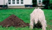 Cum se poate educa un catel să-și facă nevoile într-un singur loc! Medicul veterinar raspunde cititorilor Animal Zoo