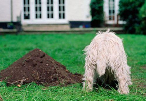 Cum se poate educa un cătel să-și facă nevoile într-un singur loc! Medicul veterinar răspunde cititorilor Animal Zoo