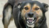 Neglijența face noi victime: încă un copil a fost mușcat de cap de un câine scăpat din lanț