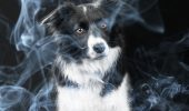 Fumatul poate afecta sănătatea animalelor de companie? Vezi ce spun specialiștii