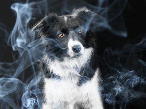 Cat de mult poate afecta fumul de țigara sănătatea animalelor de companie? Vezi ce spun specialiștii