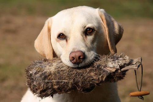 Ți-ai PIERDUT animalul de companie? Uite cum îl poți găsi
