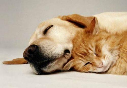 Medicul veterinar răspunde cititorilor Animal Zoo! Care sunt avantajele hranei industriale de bună calitate?