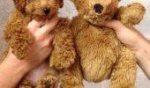 Cățeluși sau ursuleți de pluș! Voi ce părere aveți? I GALERIE FOTO