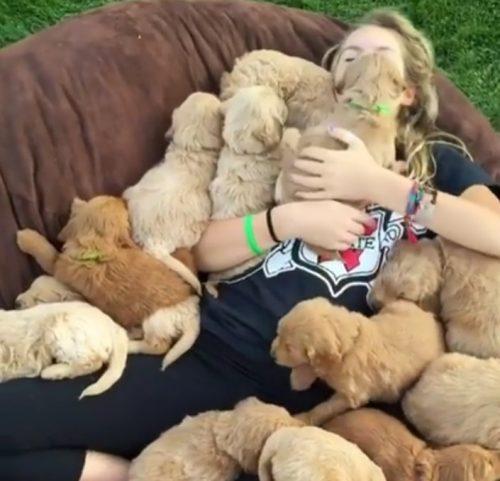 Când ating câinii maximul de drăgălășenie. Despre ce vârstă este vorba?
