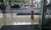 A aşteptat-o ȘASE LUNI în faţa hotelului. Gestul ei a uimit o lume întreagă – Galerie Foto