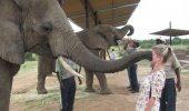 Răzbunarea animalelor. Cum se apără patrupedele când oamenii le invadează teritoriul – GALERIE FOTO