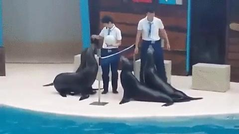 VIDEO INCREDIBIL! Patru foci joacă volei ca niște profesioniști adevărați