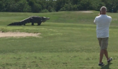 VIDEO TERIFIANT! Un aligator a SPERIAT jucatorii de pe un teren de golf din America
