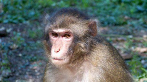 Maimuțele confiscate