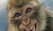 Operațiune de amploare în București! Autoritățile se chinuie să captureze o maimuță