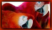 Uimitor! Nu o să crezi până nu vezi cât de bine IMITĂ aceste păsări conversația umană și alte sunete! I GALERIE VIDEO