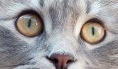 Pisica de casă, o pisică sofisticată!