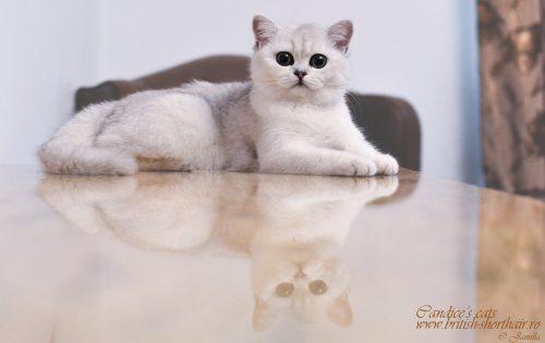 O după-amiază cu o pisică! Ai de gând să o hrăneşti sau să te joci?