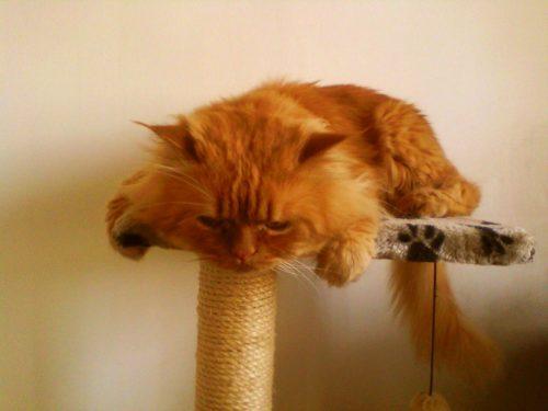 Viralul zilei: cea mai amuzantă pisică – VIDEO